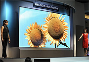 155 Zoll OLED-Display