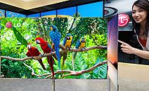 LG 55 Zoll OLED TV
